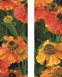 Orange Poppy Field Summer Double Banner Set