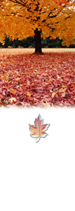 Fall Carpet of Leaves Personalize Banner